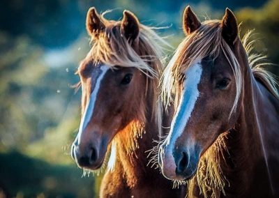 2 or the wild ponies